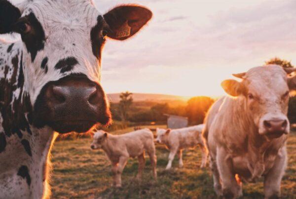 žemdirbiai renkasi gamtą tausojantį ūkininkavimą